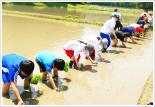 食育教育(稲作体験:田植え)