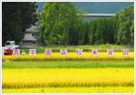食育教育(稲作体験)